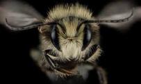 Пчёлы видят намного лучше, чем мы думали