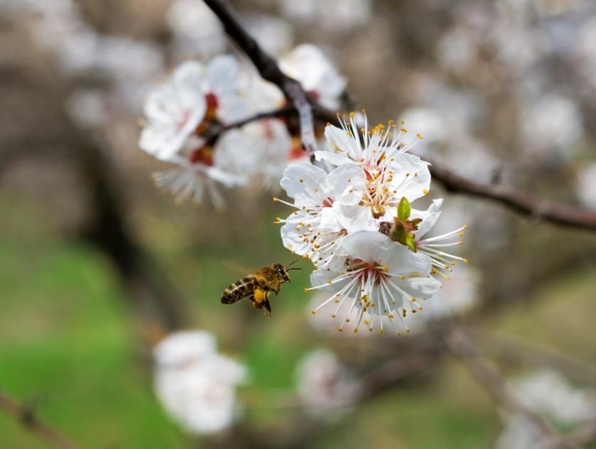 Первый форум пчеловодов в Чувашской Республике